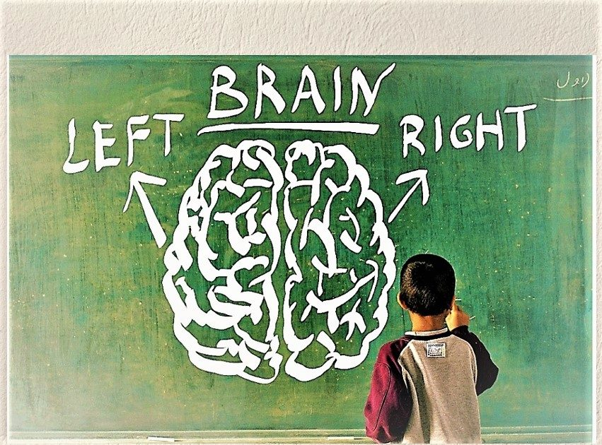 left and right brain hemisphere