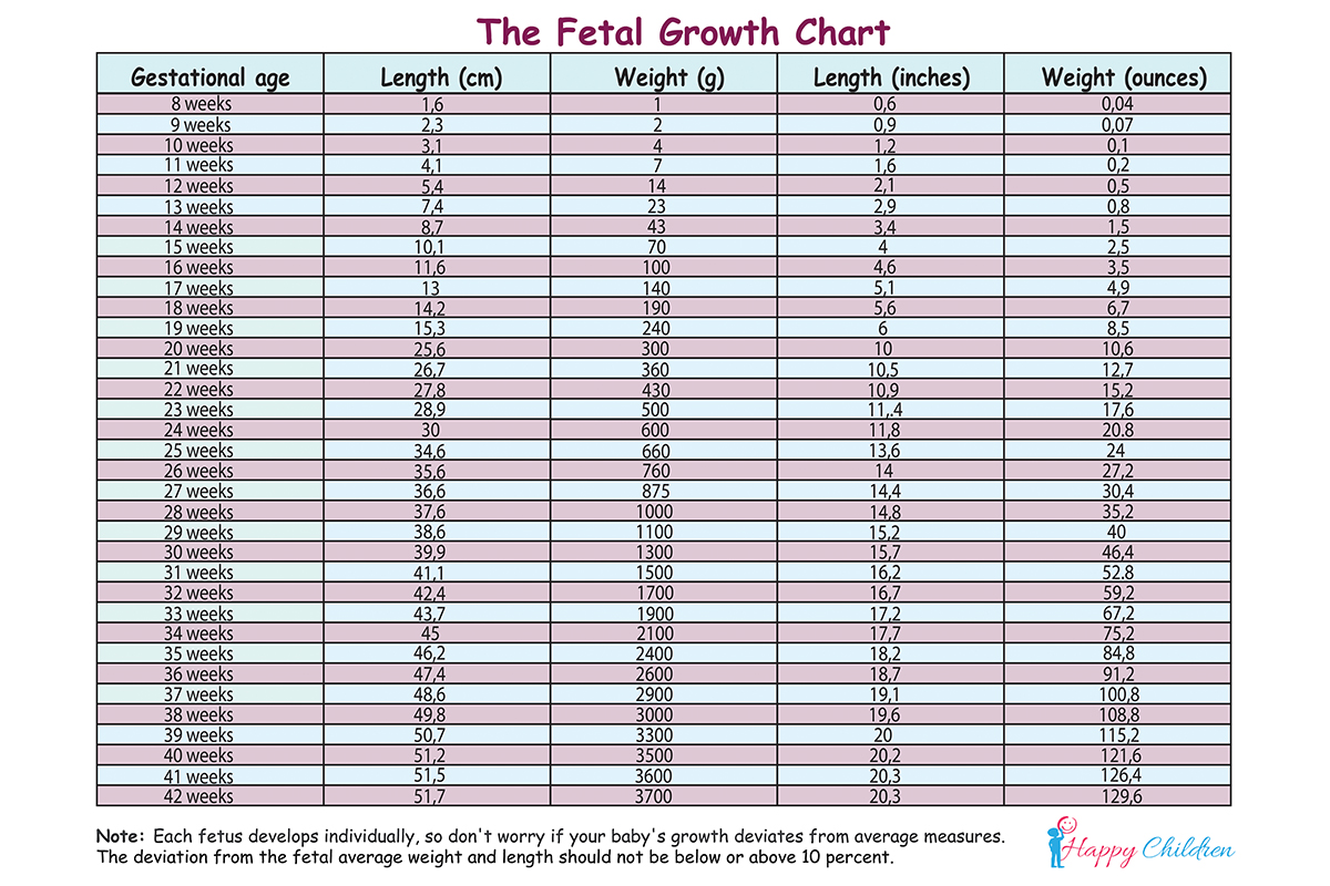 Fetal Growth Chart   The Children's Happiness Guide